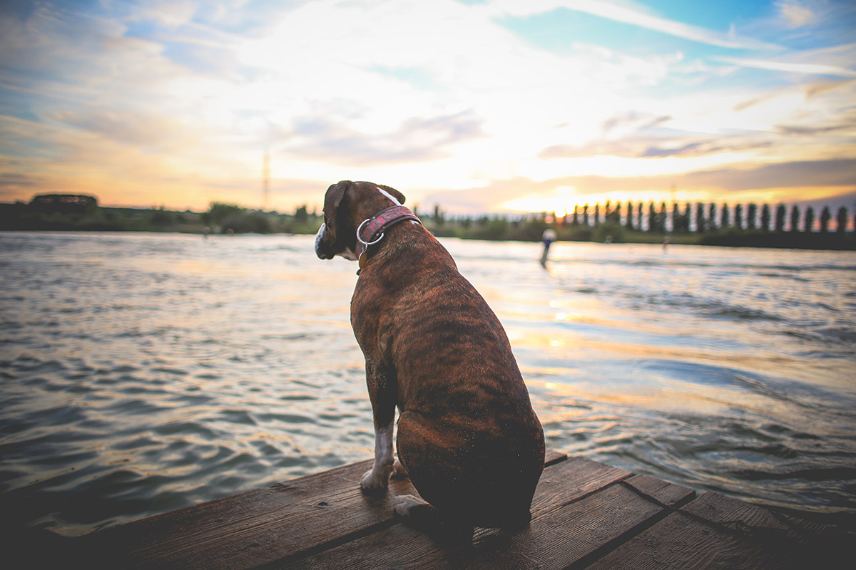 My dog likes the lake
